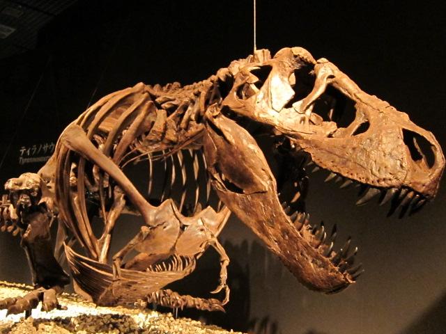 恐竜博2011にてティラノサウルス