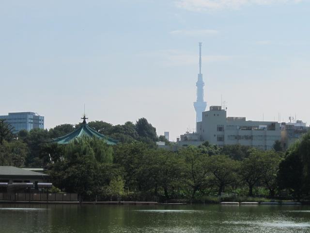 不忍池から東京スカイツリーを望む